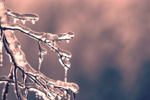icy branch, weather closures